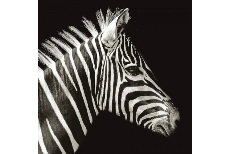 CARRE VELOURS ZEBRE