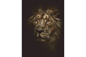 PANNEAU DÉCO LION DANS LA NUIT 140 x 190 CM